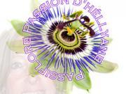 Logo passiflore