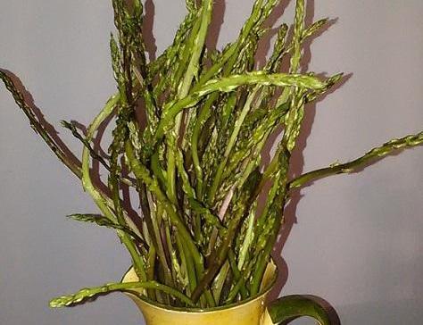Quiche sans pate aux asperges sauvages des garrigues de laurens 2